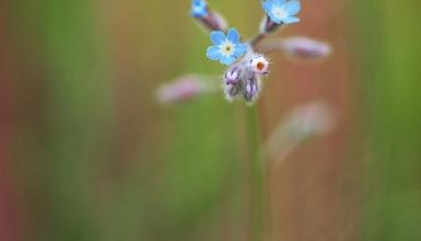 fotografije-cvijeca-070