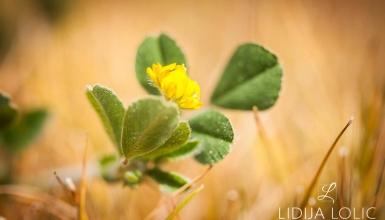 fotografije-cvijeca-071