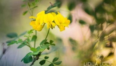 fotografije-cvijeca-074