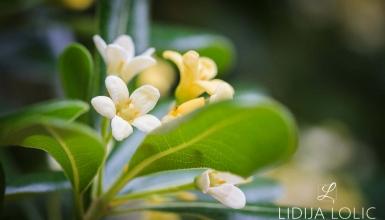 fotografije-cvijeca-076