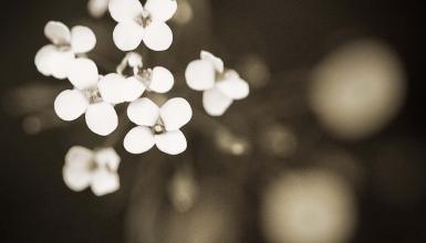 fotografije-cvijeca-078