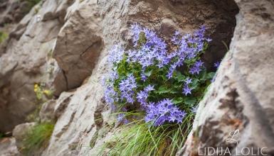 fotografije-cvijeca-079