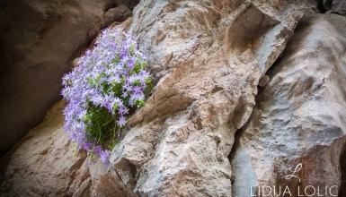 fotografije-cvijeca-080