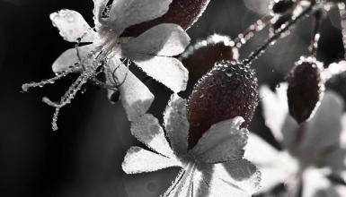 fotografije-cvijeca-081
