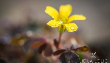 fotografije-cvijeca-082