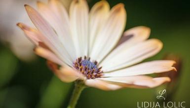 fotografije-cvijeca-083