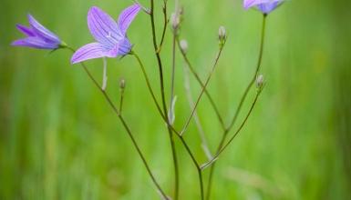 fotografije-cvijeca-084