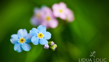 fotografije-cvijeca-085