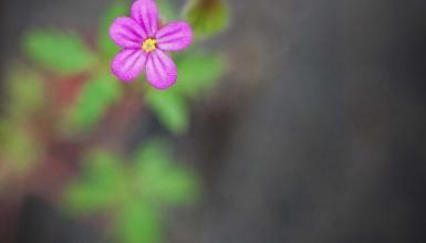 fotografije-cvijeca-088