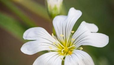 fotografije-cvijeca-089