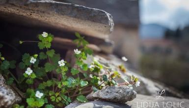 fotografije-cvijeca-091