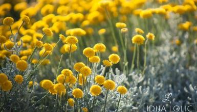 fotografije-cvijeca-092