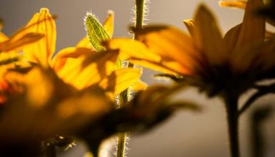 fotografije-cvijeca-093