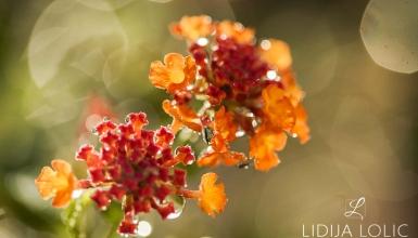 fotografije-cvijeca-096