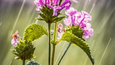 fotografije-cvijeca-097