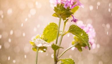 fotografije-cvijeca-098