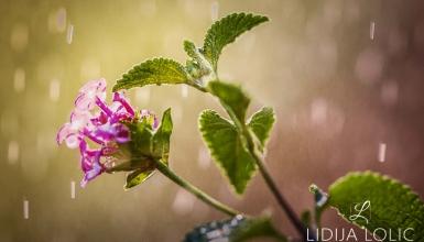 fotografije-cvijeca-099