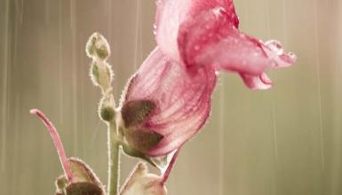 fotografije-cvijeca-101