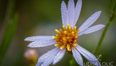 fotografije-cvijeca-102