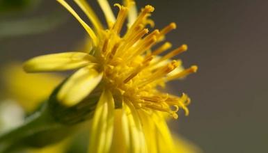 fotografije-cvijeca-103