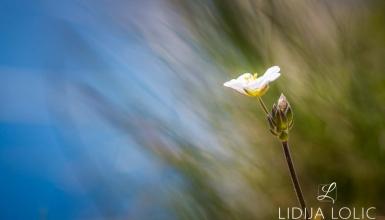 fotografije-cvijeca-104