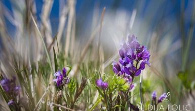 fotografije-cvijeca-105