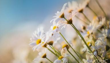 fotografije-cvijeca-106