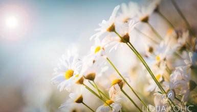 fotografije-cvijeca-107
