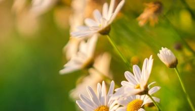 fotografije-cvijeca-108