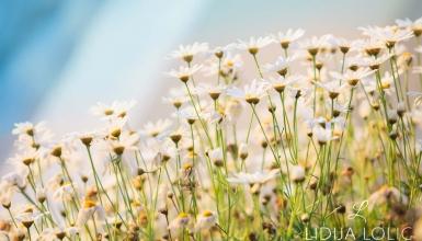 fotografije-cvijeca-109