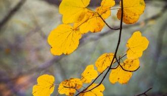 fotografije-biljaka-lisce-019