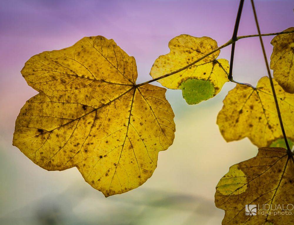 Colorful autumn on Plitvice lakes