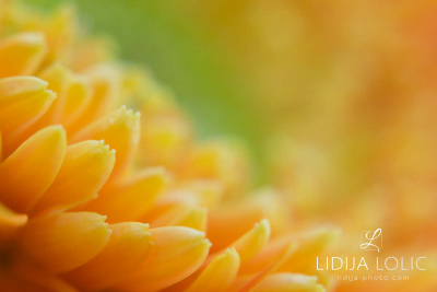 fotografije-cvijeca-macro-closeup-004