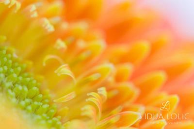 fotografije-cvijeca-macro-closeup-005