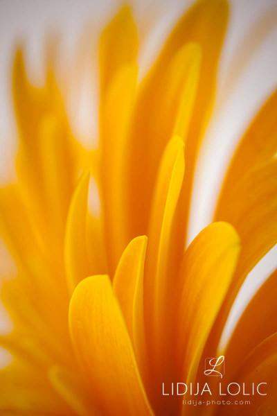 fotografije-cvijeca-macro-closeup-007