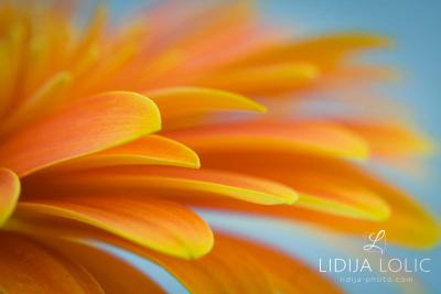 fotografije-cvijeca-macro-closeup-008