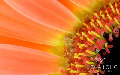 fotografije-cvijeca-macro-closeup-013