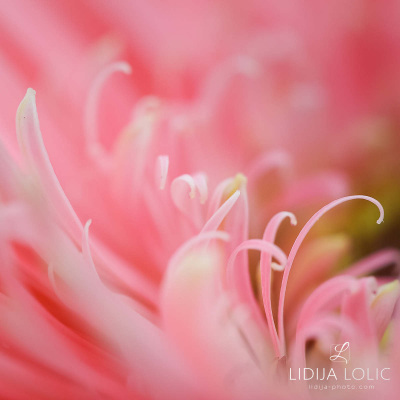 fotografije-cvijeca-macro-closeup-017