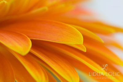 fotografije-cvijeca-macro-closeup-019