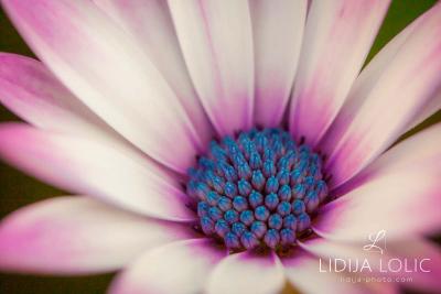 fotografije-cvijeca-macro-closeup-021
