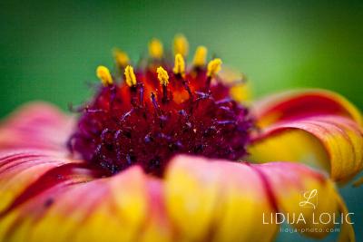 fotografije-cvijeca-macro-closeup-028