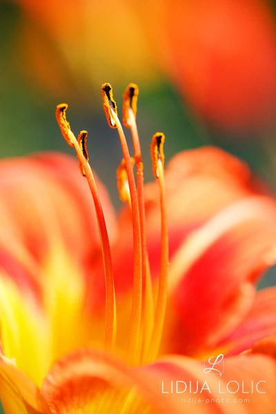 fotografije-cvijeca-macro-closeup-029