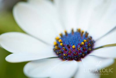 fotografije-cvijeca-macro-closeup-037