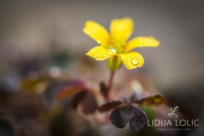 fotografije-cvijeca-macro-closeup-039