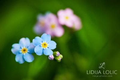 fotografije-cvijeca-macro-closeup-040