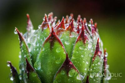 fotografije-cvijeca-macro-closeup-047