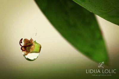 fotografije-cvijeca-macro-closeup-048