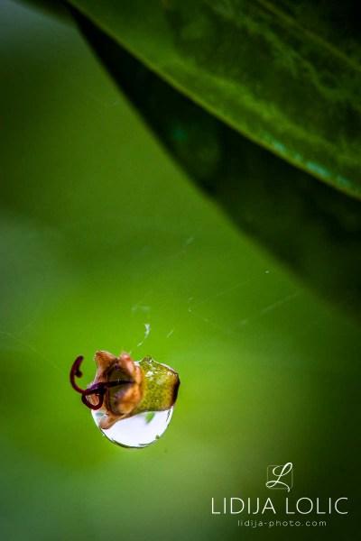 fotografije-cvijeca-macro-closeup-049
