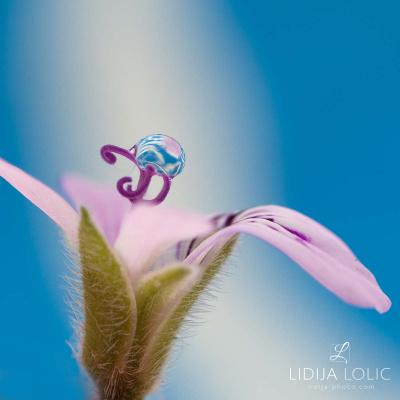 fotografije-cvijece-kapljice-macro-005