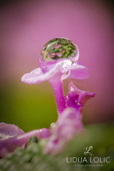 fotografije-cvijece-kapljice-macro-012
